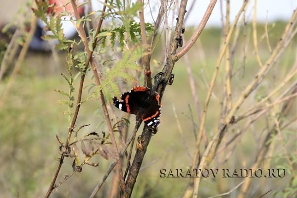 Бабочка, Белое озеро
