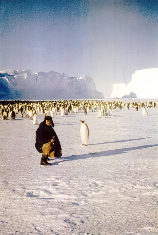 Гончаров в гостях у пингвинов