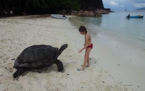 19- черепаха.JPG