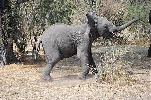 A25VR Ботсвана