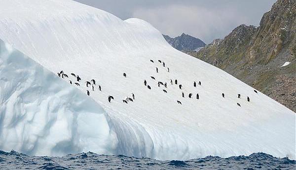 VP8PJ Южно Оркнейские острова