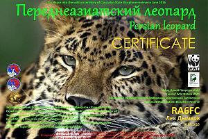 Диплом ЭГКР RT9K/6 «Переднеазиатский леопард».