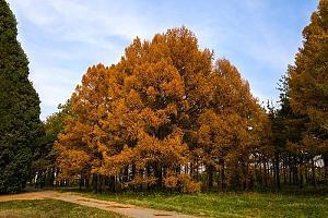 В эфире UNFF-0069 Иссыкский государственный дендрологический парк New One