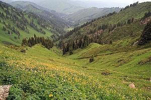 UNFF-0025 Алматинский государственный природный заповедник с 7 по 9 июля 2017