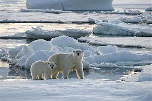 RI0LI – экспедиция на остров Леонтьева, Медвежьи острова в Восточно-Сибирском море – IOTA AS-022