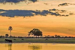 В эфире национальный парк Чобе, Ботсвана A2FF-0002