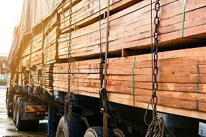«Росэлектроника» защитит ценные породы деревьев от незаконной вырубки