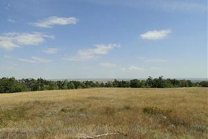 GREEN PARTY из природного парка «Донской» (RFF-0177) – плато Венцы 6-7 июня 2020