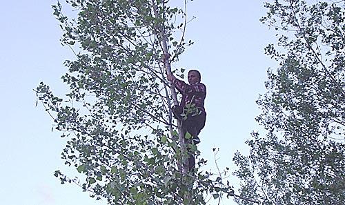 Столь тонкие деревья для Димы RA9OBX - не проблема