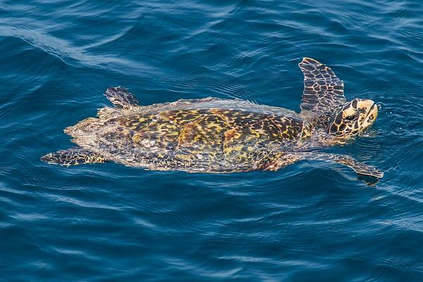 8Q7NH Мальдивские острова