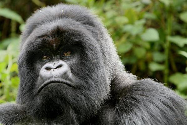 Руанда 9X0SS