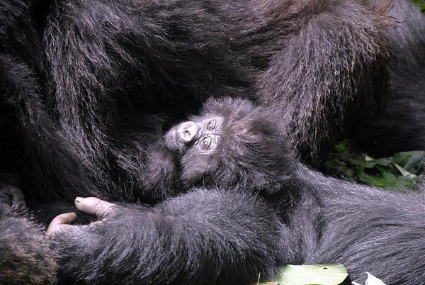 Руанда 9X2AW