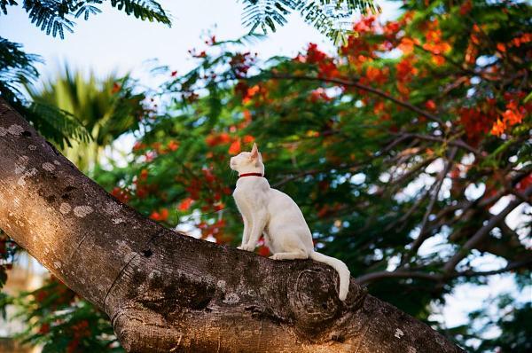 Остров Сайпан JH0CJH/KH0 Наблюдение за птицами