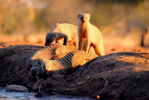 Ботсвана A25TVB Национальный парк Машату