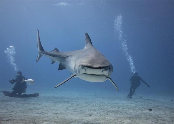 C6A/DD0VR Тайгер Бич, Багамские острова. DX Новости