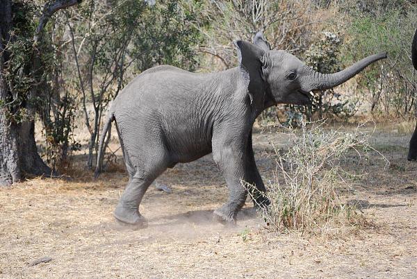A25VR Слон, Дельта Окаванго, Ботсвана.