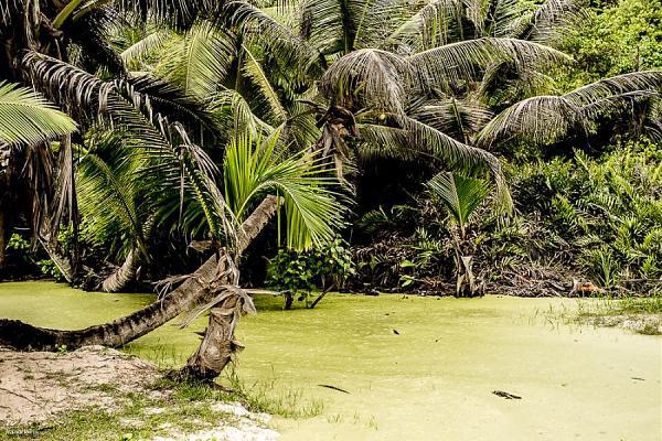 Остров Ла Диг S79H Сейшельские острова