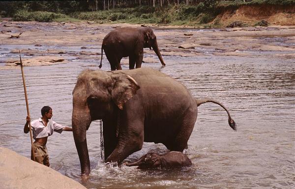 4S7BHG Шри Ланка Рамбуккана